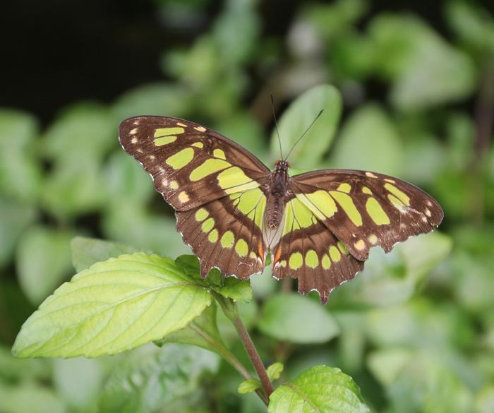 Lekker-Groen-en-veel-vlinders