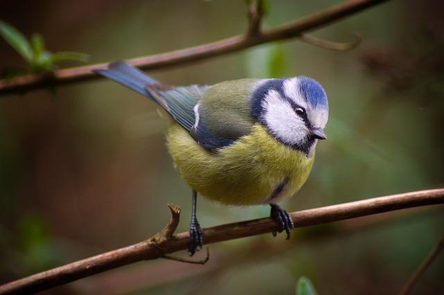 Vogel-, vlinder-, bij-vriendelijke tuin